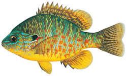 Re: Fish